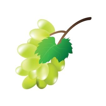 Зеленый виноград на белом фоне