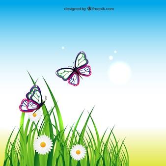 Зеленая трава и бабочки