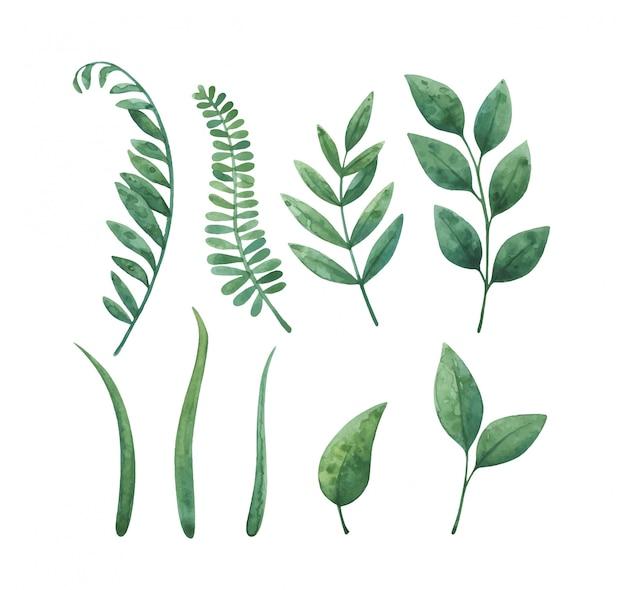 緑の草と葉。植物と水彩イラストのセット
