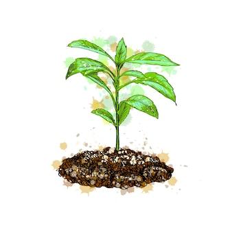緑の草と若い植物。図