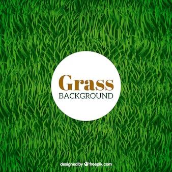Sfondo verde erba nel design realistico