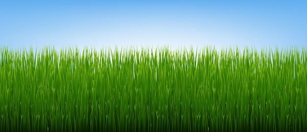 緑の草の境界線とグラデーションメッシュ、イラストと青空の背景