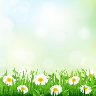 녹색 잔디 테두리와 데이지