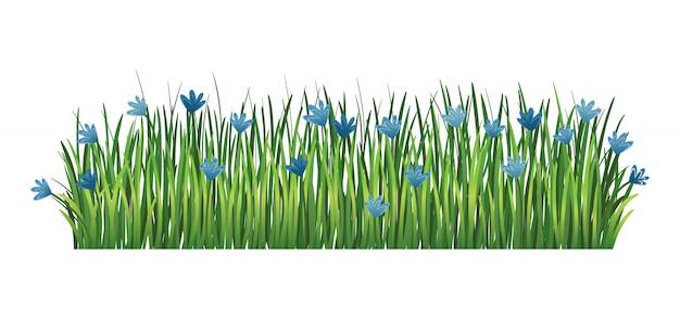 緑の芝生の境界線。新鮮な緑のヤグルマギクと枝草。透明な背景に分離されました。