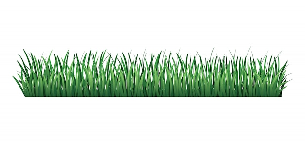 Green grass border. fresh green grass. isolated. vector illustration for use as design element