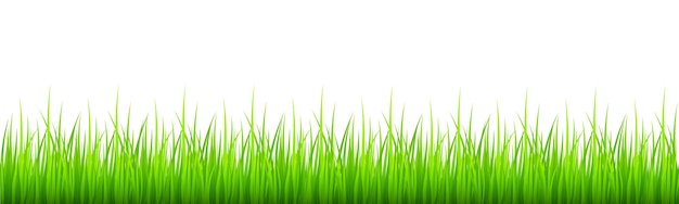 Green grass border lawn or meadow natural texture