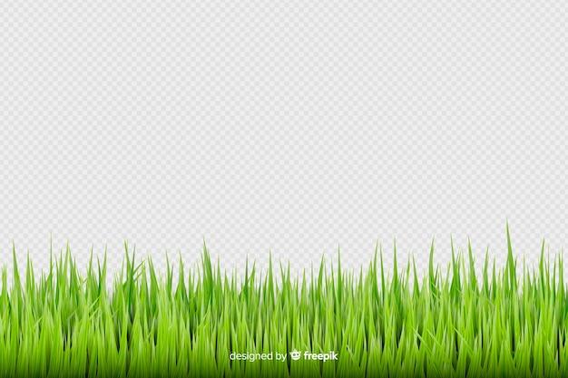 Green grass border realistic design