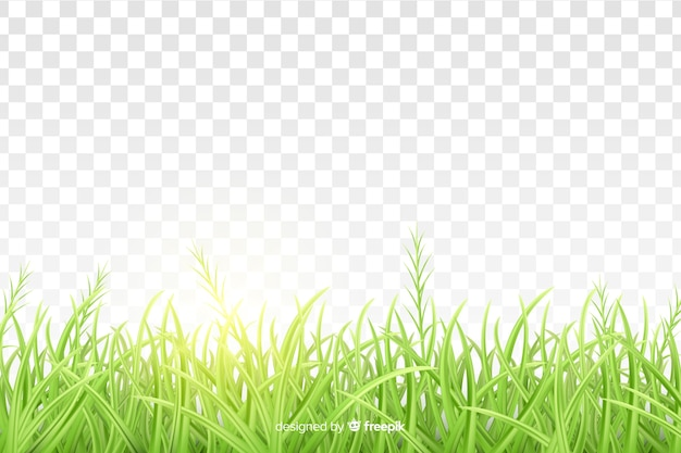 Green grass border realistic design
