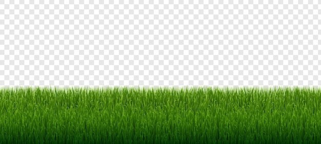 Green grass border set isolated transparent background