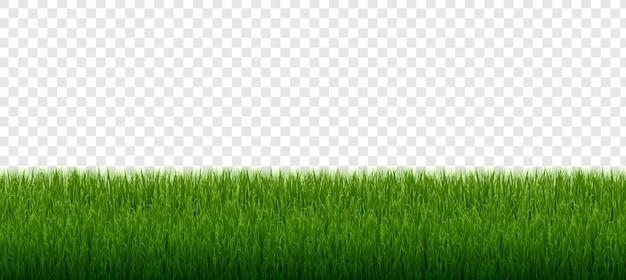 緑の芝生の境界線セット透明な背景に分離