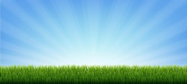 Граница зеленой травы с солнечными лучами