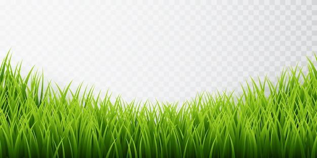 緑の草の境界線 Premiumベクター