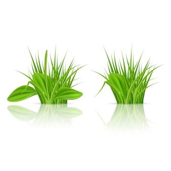 緑の草の要素と飾る。白い背景のイラスト
