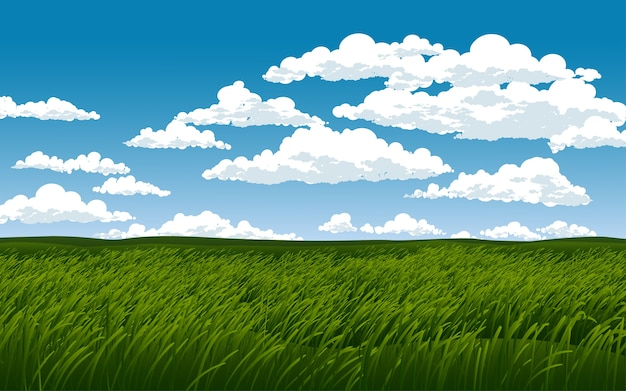 Green grass field at cloudy day