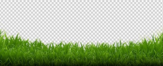 Зеленая трава рамка прозрачный фон с градиентной сеткой