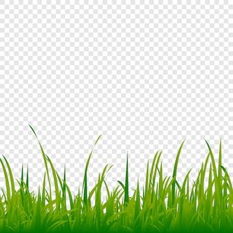 緑の草草の芝生。透明な背景に写実的な草。
