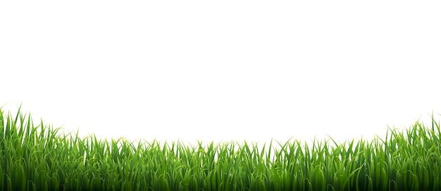 白い背景で隔離の緑の草