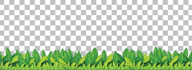 透明な背景に緑の草