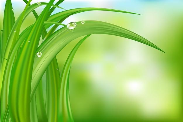 水滴のある抽象的な背景の上の緑の草