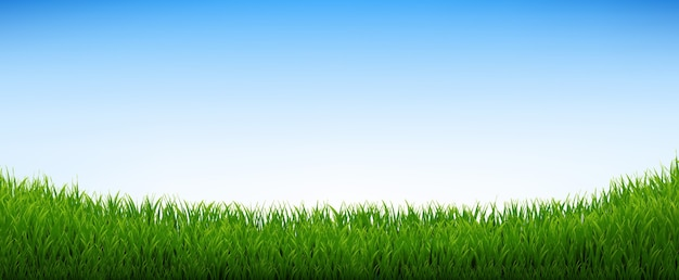 青い空と緑の草のパノラマ