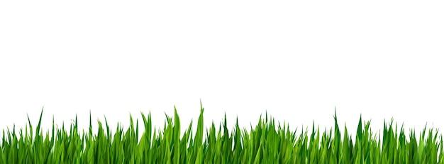 녹색 잔디 현실적인 테두리 흰색 배경에 고립