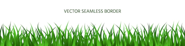 Green grass seamless border, spring lawn herbal panoramic background, summer horizontal banner.