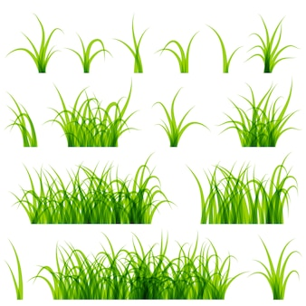 Green grass set isolated on white background