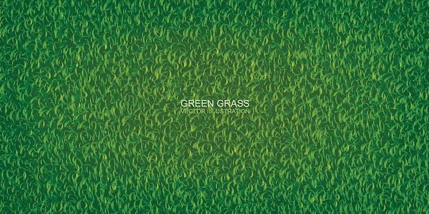 Текстура зеленой травы для фона.