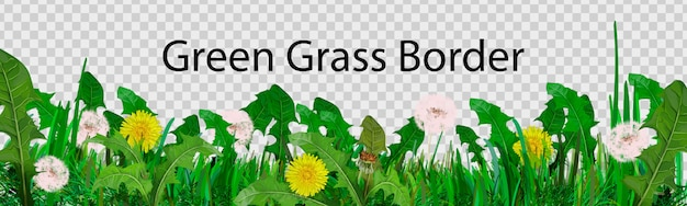Green grass that is longitudinal to use as a design element isolated from a transparent background.