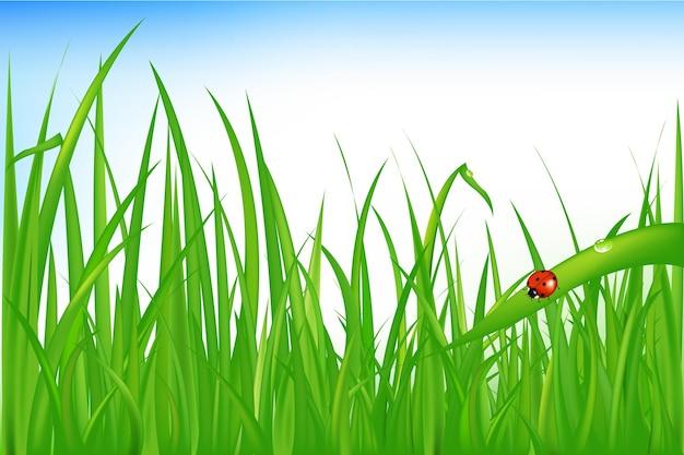 Зеленая трава с божьей коровкой