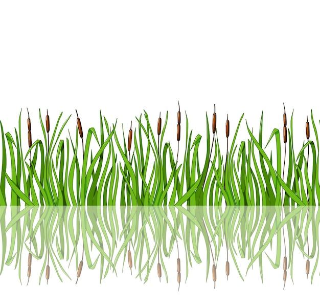葦と反射のある緑の草はシームレスなイラストです。