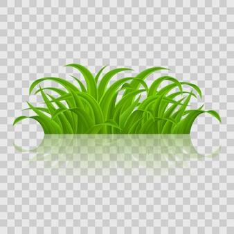 녹색 풀 프리미엄 벡터