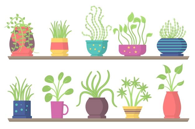 Набор зеленых подвесных комнатных растений, элементы для украшения интерьера дома или офиса на белом фоне. набор комнатных растений на полках, подставках, столах.