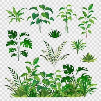 녹색 초본 요소. 장식적인 아름다움 자연 양치류와 잎 식물 또는 허브 채소 가지와 꽃 식물 장식 세트