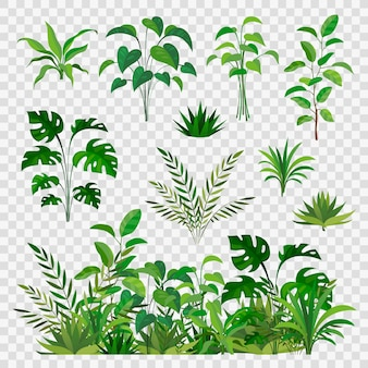 Green herbal elements. decorative beauty nature ferns and leaf plants or herbs greens   branches and flower botanic decor set