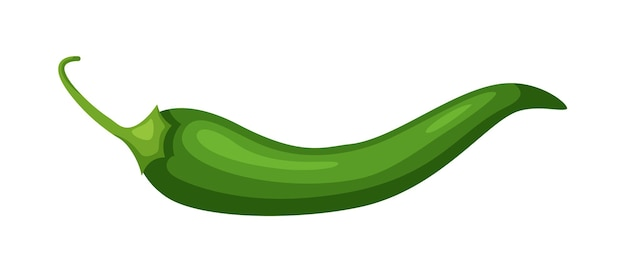 Green hot pepper jalapeno isolated on white background