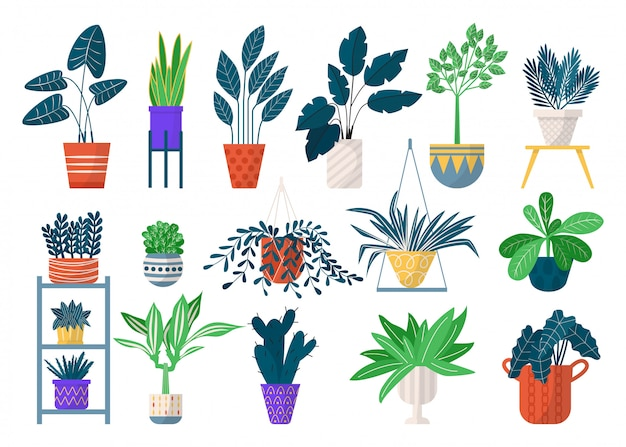 Green houseplants in pots icon set of   illustrations. home planted greenery, flowers and pots with succulents, cactuses. house potted plants for floral  and botany, decoration.