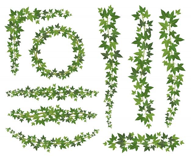 Зеленый плющ листья на висящих вьющихся ветках. стена для лазания по плющу