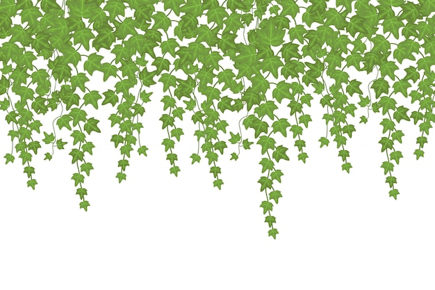 Green ivy wall climbing plant hanging from above. garden decoration