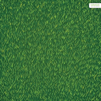 Green lawn grass texture for background.