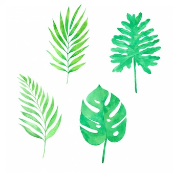 Green leaf hand pained in watercolor collection