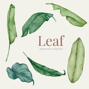 녹색 잎 손 페인트 수채화 모음