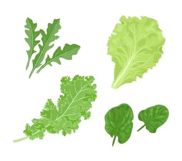 녹색 잎을 설정합니다. 시금치, 아루 굴라, 양상추, 케일.
