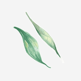 Green leaf  vintage watercolor sticker set