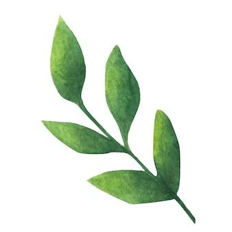녹색 잎. 장식용 수채화 요소입니다.