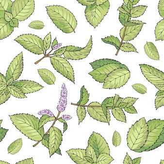 Green leafs of fresh mint. vector seamless pattern. mint seamless green leaf pattern illustration