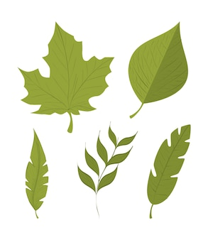 Green leafs isolated design