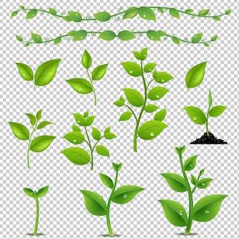 녹색 나뭇잎과 식물 세트 그라디언트 메쉬 일러스트와 함께 격리
