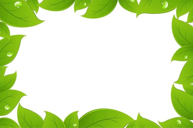 緑の葉の背景、白い背景、イラスト