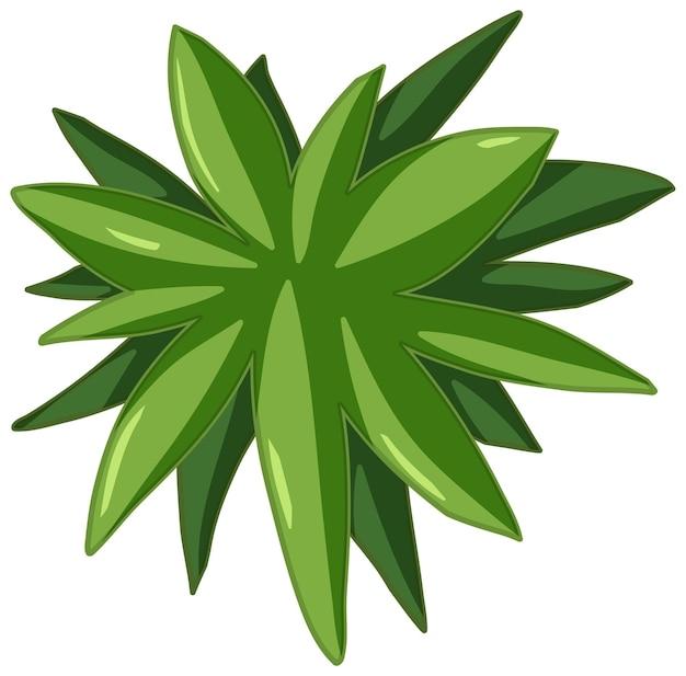 Foglie verdi in stile cartone animato su sfondo bianco